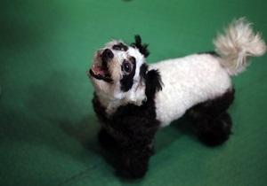 В Австралии открылась школа танцев для собак