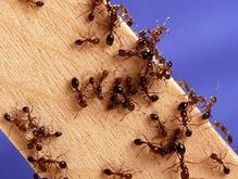 Ученые обнаружили марсианских муравьев