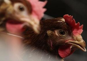 Казахстан запретил импорт птичьего мяса из Украины