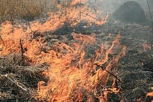 В Одесской области ликвидирован пожар в заповеднике