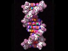 В интернете можно будет сравнивать ДНК