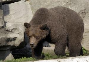 В США медведь забрел на территорию университетского городка