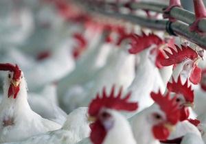 Турция станет крупнейшим поставщиком курятины в Россию