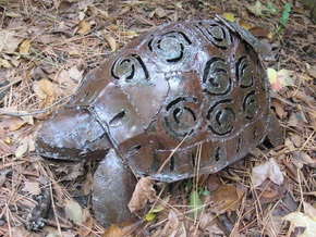 Узбекский проводник пытался незаконно провезти в Украину 250 черепах