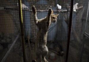 Охранники тюрьмы в Сыктывкаре задержали кошку