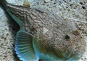 ТВ: Море у побережья Одессы наводнили ядовитые рыбы-драконы