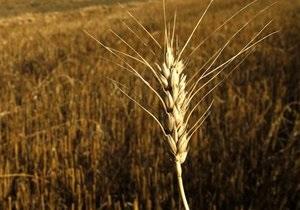 Кабмин намерен выделить пять миллиардов гривен на форвардные закупки зерна