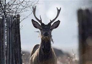 Экологи: Из-за сильных морозов дикие животные из близлежащих областей бегут в Киев