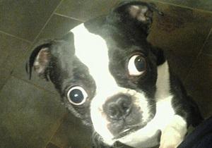 В Книгу рекордов Гиннесса попал пес с самыми большими глазами