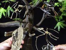 В Китае обнаружен скелет карликового динозавра