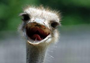 В российском зоопарке страус не пережил холода