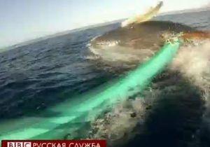 Кит едва не опрокинул лодку с туристами - видео