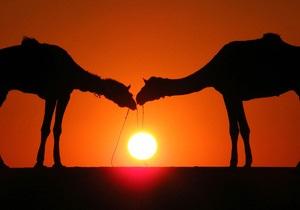 Конкурс красоты среди верблюдов проходит в Саудовской Аравии