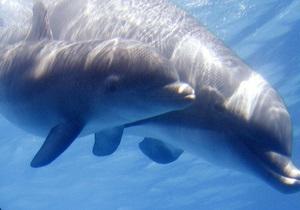 В Северном море обнаружили останки древнего дельфина