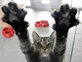 Ученые: Мурлыканье кошек схоже частотами с плачем  младенцев