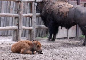 В киевском зоопарке голодают животные