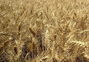 Янукович подписал закон о введении 9-14% пошлин на экспорт зерна
