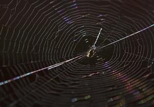 Биологи выяснили, как пауки плетут свои ловчие сети