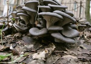 В Китае обнаружили самый большой в мире гриб