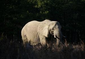 В Сиднее на служащую зоопарка напал слон