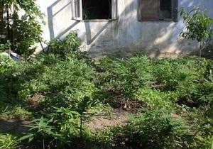 новости Крыма - наркотики - конопля - Чтобы жить до ста лет: В Крыму пенсионерка выращивала на подворье 93 куста конопли