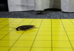Британские ученые могут приступить к созданию нового аналога антибиотиков из тараканов