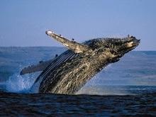 В Лондоне решается судьба китов