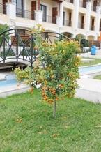 Инвестиции в кипрскую недвижимость — выгодное вложение