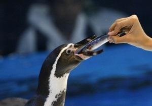В Токио разыскивают сбежавшего из зоопарка пингвина