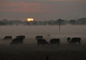 В Николаевской области 29 коров погибло от переедания