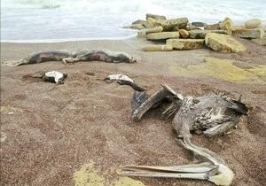 В Перу отмечен новый случай массовой гибели животных