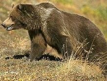 В Македонии за кражу меда осужден медведь