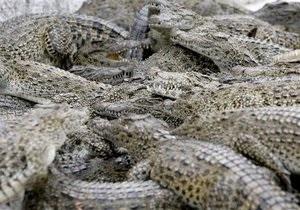 В Таиланде из-за наводнения с фермы сбежали около ста крокодилов
