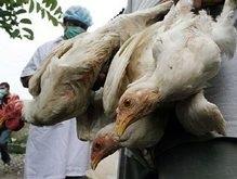 Украинские врачи запретили ввозить мясо птицы из Польши