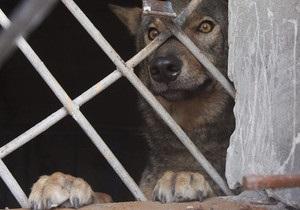 Сбежавший в Донецке волк вернулся домой