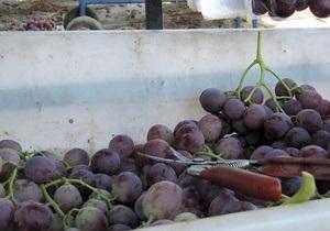В Одесской области на виноградниках 37 человек отравились ядохимикатами