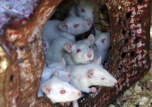 На территории Хэнфордского ядерного комплекса в США завелись радиоактивные мыши