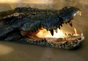 В ЮАР из-за наводнения с фермы сбежали 15 тысяч крокодилов