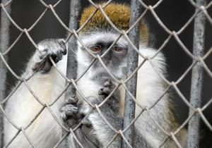 На развитие Киевского зоопарка выделят около 12-ти миллионов гривен