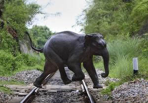 В Индии под колесами поезда погибли семь слонов
