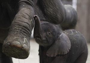 Слонов в Киевский зоопарк привезут в 2012 году