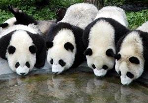 Ученые: Геном панды очень похож на геном собаки