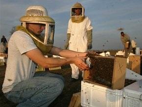 Американский ученый: насекомые могут стать мощным оружием в руках террористов
