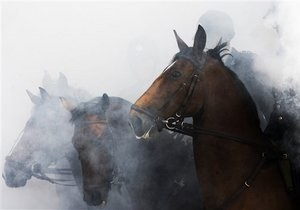 Во Львовской области неизвестный мужчина расстрелял табун лошадей