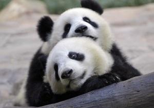 Лидер КНР и президент Франции договорились о доставке в Париж двух больших панд