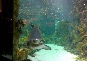 Администрация Ocean Plaza объяснила, откуда взялись повреждения у их акулы