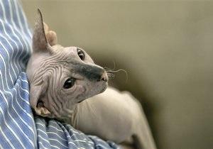 Новости России - странные новости: В России кота арестовали за долги хозяина