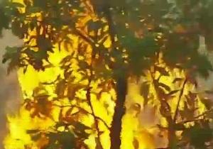 Австралия борется с сильными пожарами - видео
