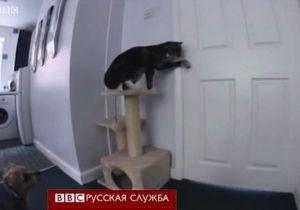 Кошка с собакой: дерзкий побег с кухни - видео