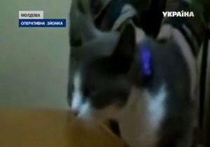 В Молдове поймали кота, проносившего в тюрьму наркотики
